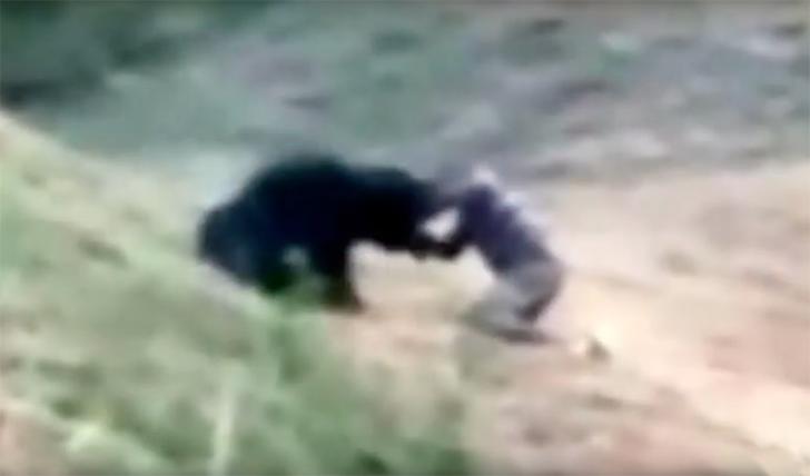 India: voleva selfie con orso, sbranato