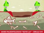 Tornano gli eventi al Museo Paleontologico Silvio Lai di Ceriale