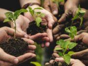 Bando agricoltura sociale