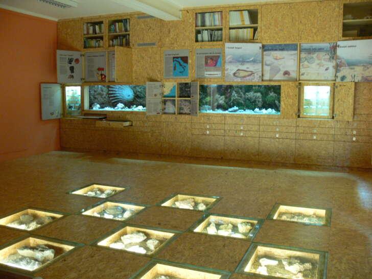 Eventi al Museo paleontologico di Ceriale