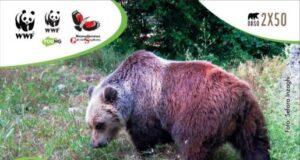 Orso bruno 2 x 50, il WWF cerca aiuto in Abruzzo