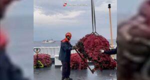 L'operazione No Driftnets della Guardia Costiera contro la pesca illegale