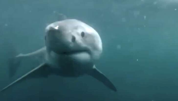 Sui social il video di uno squalo a Bordighera, ma è un fake