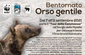 Conoscere bene e coesistere con l'orso marsicano