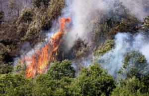 La campagna del WWF per fermare l'emergenza incendi