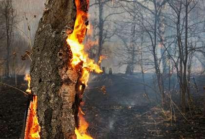 WWF, Mediterraneo in fiamme