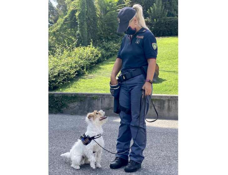 Leone, il nuovo cane antidroga della Polizia genovese