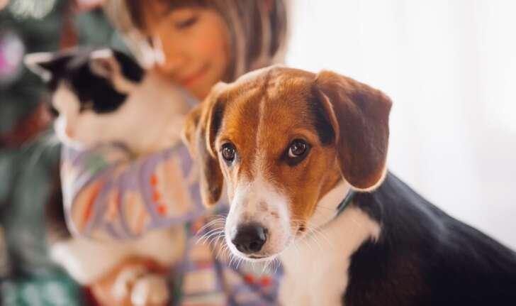 Animali in condominio, nuove regole