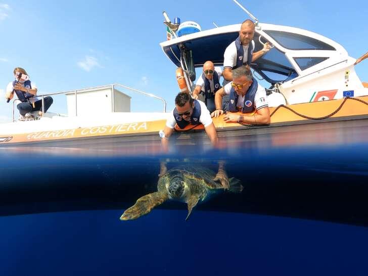 La Tartaruga Vangelina, è tornata al mare