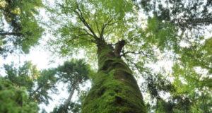 Negoziati ONU biodiversità, preoccupato il WWF