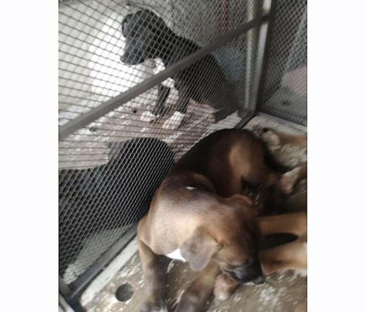 Trovati 12 cuccioli sulle alture di Sestri Ponente