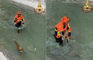 I Vigili del fuoco salvano capriolo a Santa Caterina